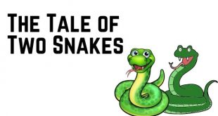 The Tale of Two Snakes